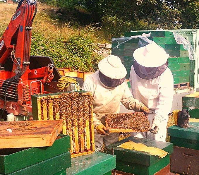 Produzione di miele
